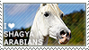I love Shagya Arabians by WishmasterAlchemist