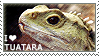 I love Tuatara by WishmasterAlchemist