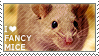 I love Fancy Mice