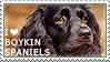 I love Boykin Spaniels by WishmasterAlchemist