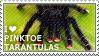 I love Pinktoe Tarantulas by WishmasterAlchemist