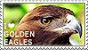 I love Golden Eagles