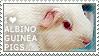 I love Albino Guinea Pigs by WishmasterAlchemist
