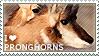 I love Pronghorns