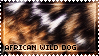 [AP II] African Wild Dog