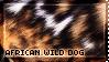 [AP II] African Wild Dog by WishmasterAlchemist