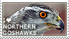 I love Northern Goshawks by WishmasterAlchemist