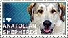 I love Anatolian Shepherds by WishmasterAlchemist