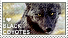 I love Black Coyotes