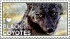 I love Black Coyotes by WishmasterAlchemist