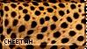 [AP V] Cheetah by WishmasterAlchemist