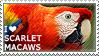 I love Scarlet Macaws
