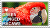 I love Green-winged Macaws
