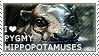 I love Pygmy Hippopotamuses