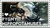 I love Pygmy Hippopotamuses by WishmasterAlchemist