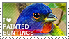 I love Painted Buntings