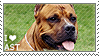 I love American Staffordshire Terriers
