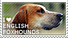 I love English Foxhounds by WishmasterAlchemist
