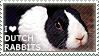 I love Dutch Rabbits