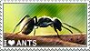 I love Ants by WishmasterAlchemist