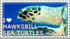 I love Hawksbill Sea Turtles by WishmasterAlchemist