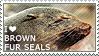 I love Brown Fur Seals
