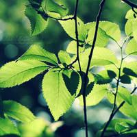 Lush Green by WishmasterAlchemist