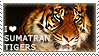 I love Sumatran Tigers