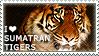 I love Sumatran Tigers by WishmasterAlchemist