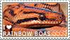 I love Rainbow Boas