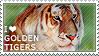 I love Golden Tigers by WishmasterAlchemist