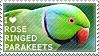 I love Rose-ringed Parakeets