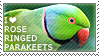 I love Rose-ringed Parakeets by WishmasterAlchemist