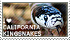 I love California Kingsnakes by WishmasterAlchemist