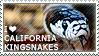 I love California Kingsnakes by WishmasterAlchemist
