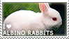 I love Albino Rabbits by WishmasterAlchemist