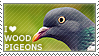 I love Wood Pigeons by WishmasterAlchemist