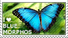 I love Blue Morphos by WishmasterAlchemist