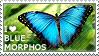 I love Blue Morphos by WishmasterAlchemist