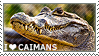 I love Caimans