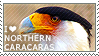 I love Northern Caracaras by WishmasterAlchemist