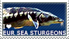 I love European Sea Sturgeons