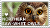 I love Northern Saw-whet Owls by WishmasterAlchemist