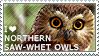 I love Northern Saw-whet Owls by WishmasterAlchemist