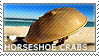 I love Horseshoe Crabs by WishmasterAlchemist
