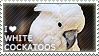 I love White Cockatoos by WishmasterAlchemist