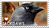 I love Jackdaws by WishmasterAlchemist
