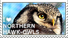I love Northern Hawk-Owls by WishmasterAlchemist