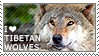 I love Tibetan Wolves
