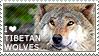 I love Tibetan Wolves by WishmasterAlchemist